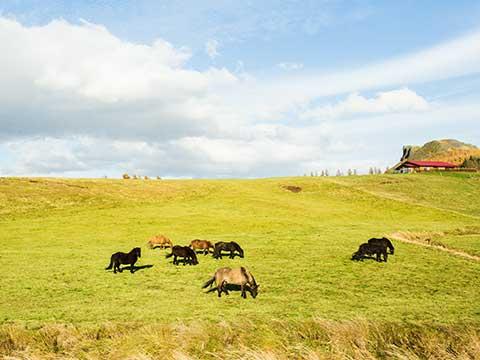 Control de ganado con drones